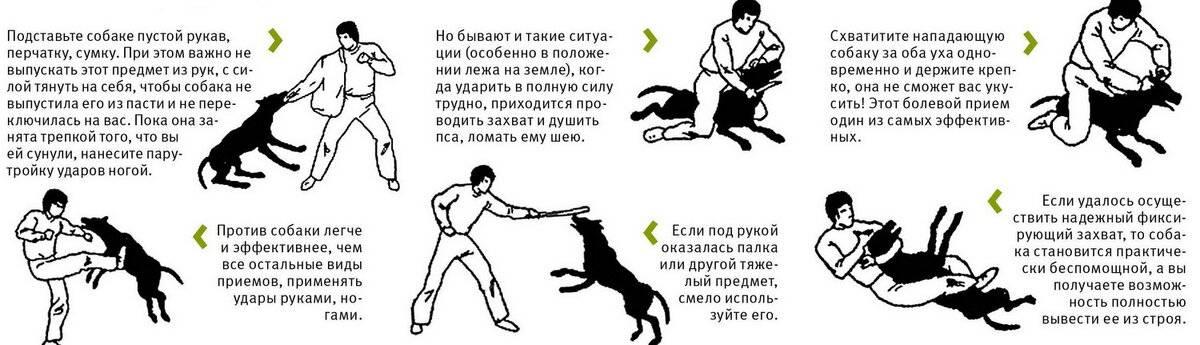 Что делать если напала собака: как правильно себя вести