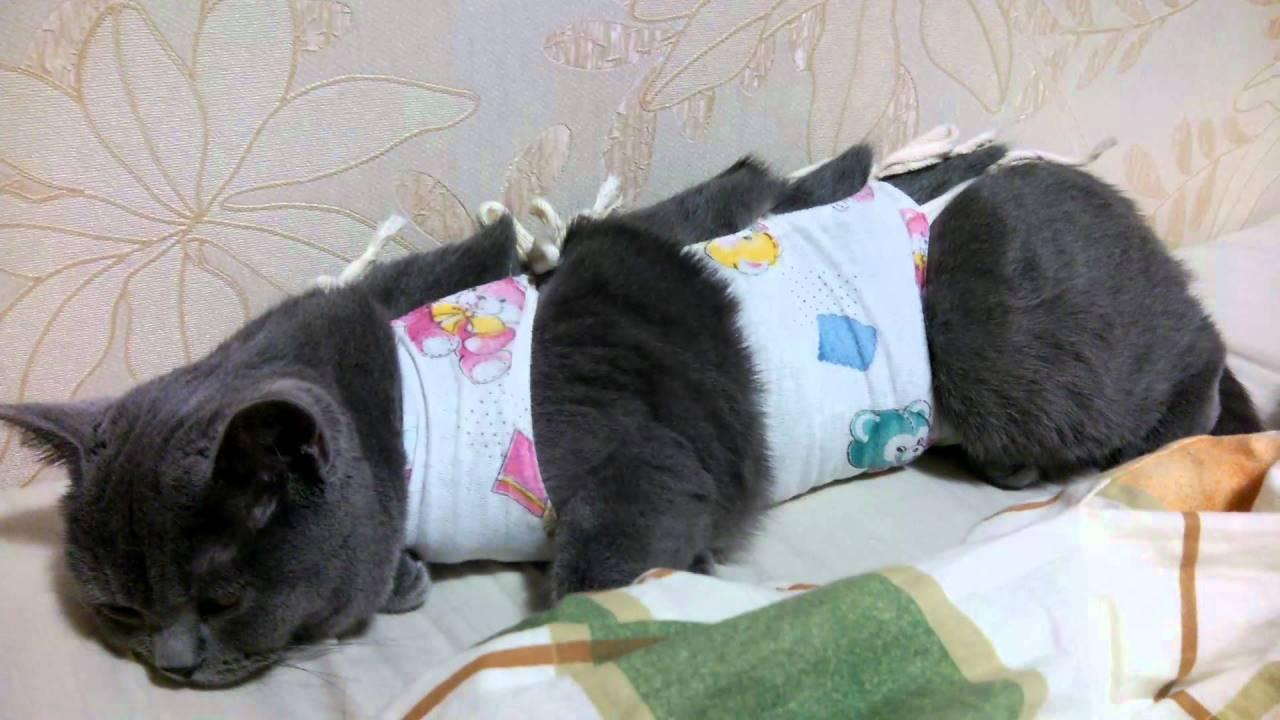 Кошка после стерилизации: особенности ухода в послеоперационный период