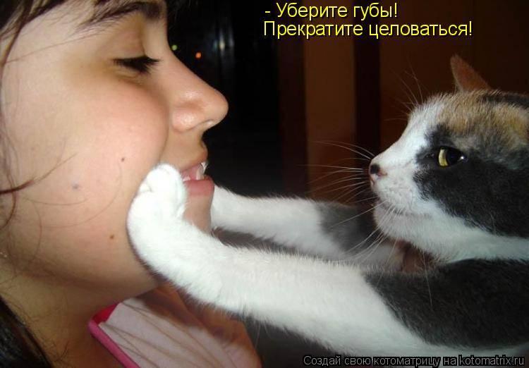 Почему нельзя целовать кошек в морду. правила безопасного общения. почему целовать кошек нельзя