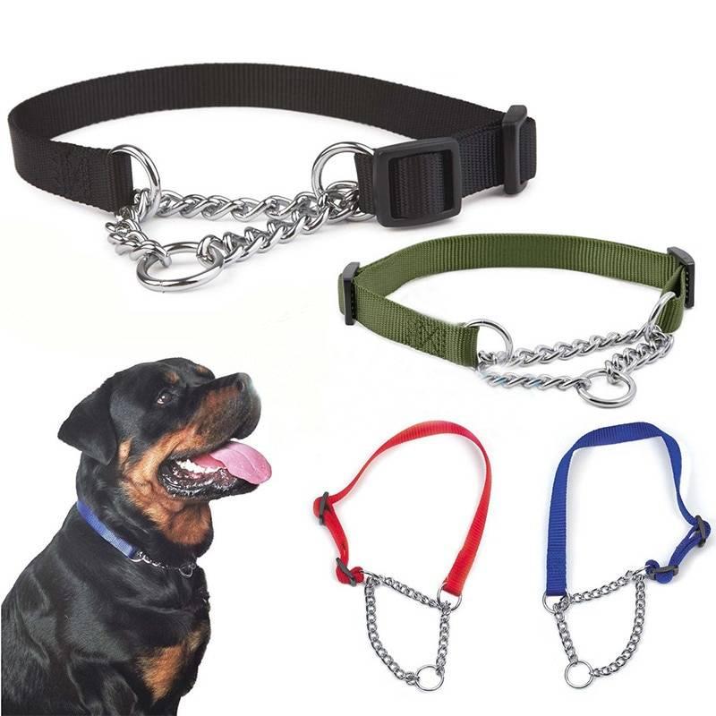Ошейники для собак: разновидности, как выбрать