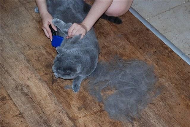 Как очистить вещи от кошачьей шерсти?