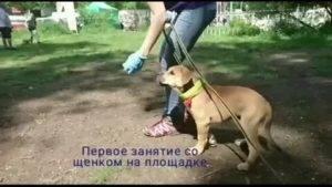 Руководство по правильному воспитанию щенков от рождения для начинающих