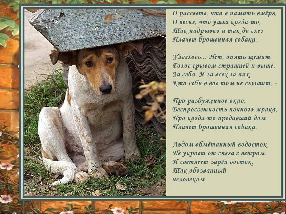 Вы нашли собаку, что делать?
