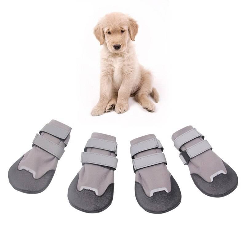 Виды обуви для собак мелких пород: как выбрать готовые изделия и как сделать своими руками