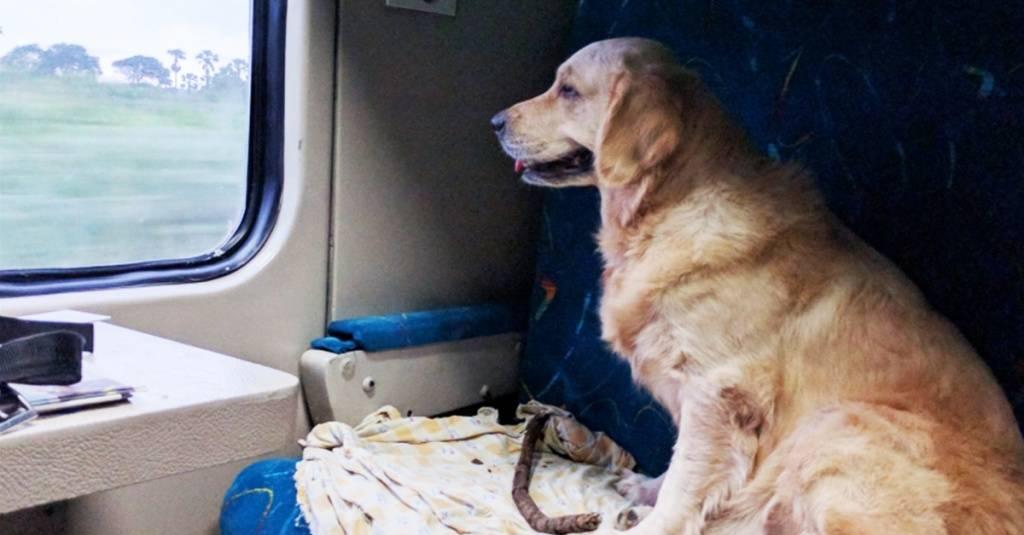 Перевозка кошек - транспортировка в поезде и самолете