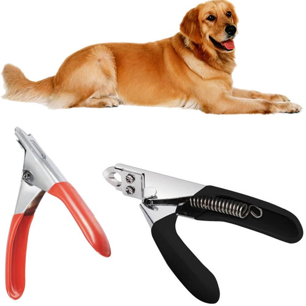 Когтерезки для собак (34 фото): когтерез с ограничителем, электрические когтеточки и другие виды. как выбрать ножницы для когтей крупных и мелких собак?