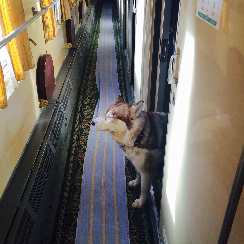 Кошка в поезде – правила для хвостатого путешественника