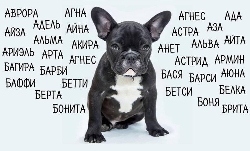 Клички для собак девочек: как назвать редким и красивым именем