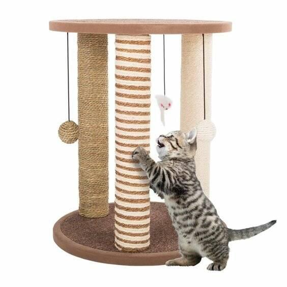 Приучаем котенка к когтеточке