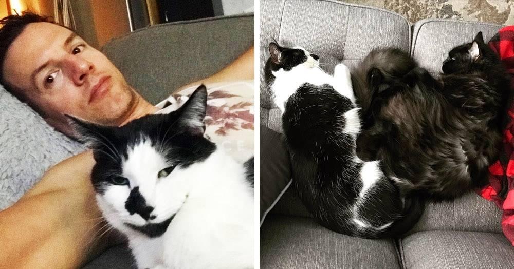 Скучают ли кошки