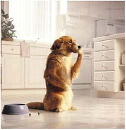 Собаку вырвало кормом сразу после еды: почему питомец рвет непереваренной пищей, причины рвоты и отличие от срыгивания
