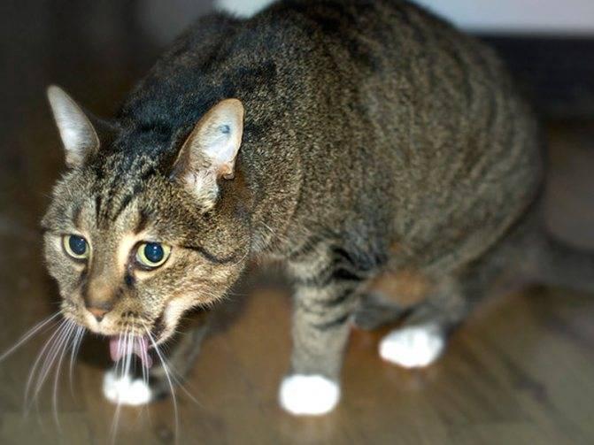 15 признаков того, что кошка признается человеку в любви
