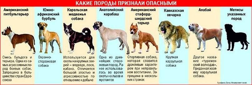 Топ-10 самых опасных собак в мире: перечень и описание пород