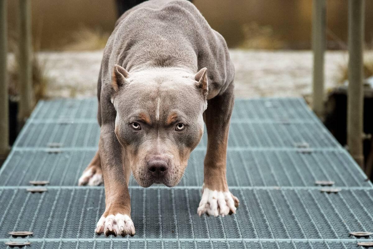 Топ 10 собак для ленивых хозяев