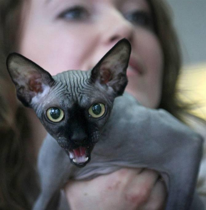 Топ-10 самых страшных в мире котов и кошек