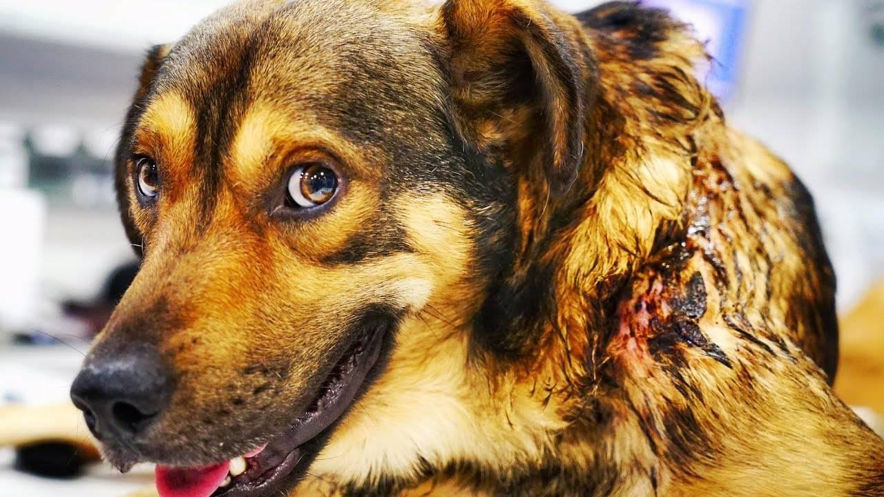 Могут ли собаки плакать слезами и что делать если это произошло: советы