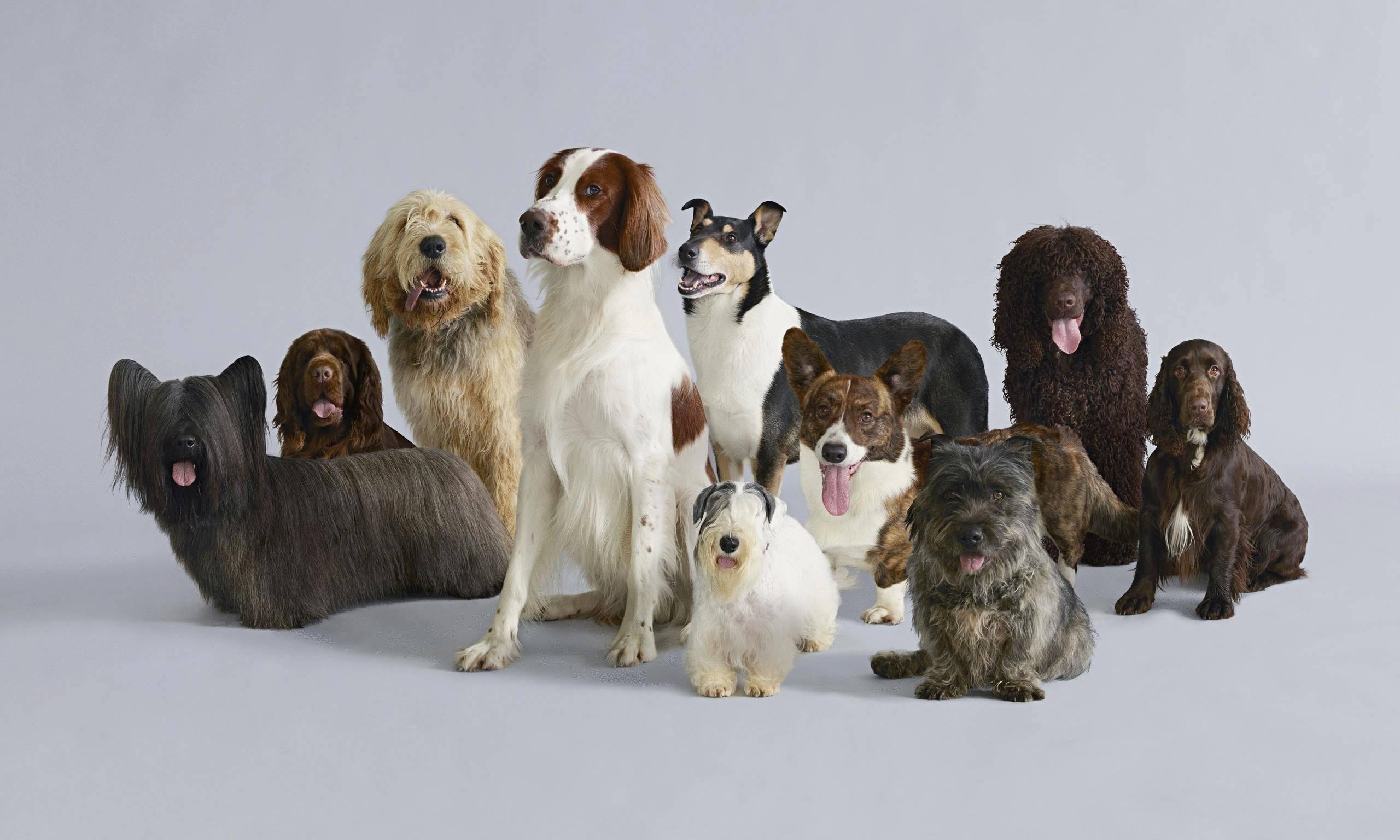 Какие самые маленькие породы собак в мире?