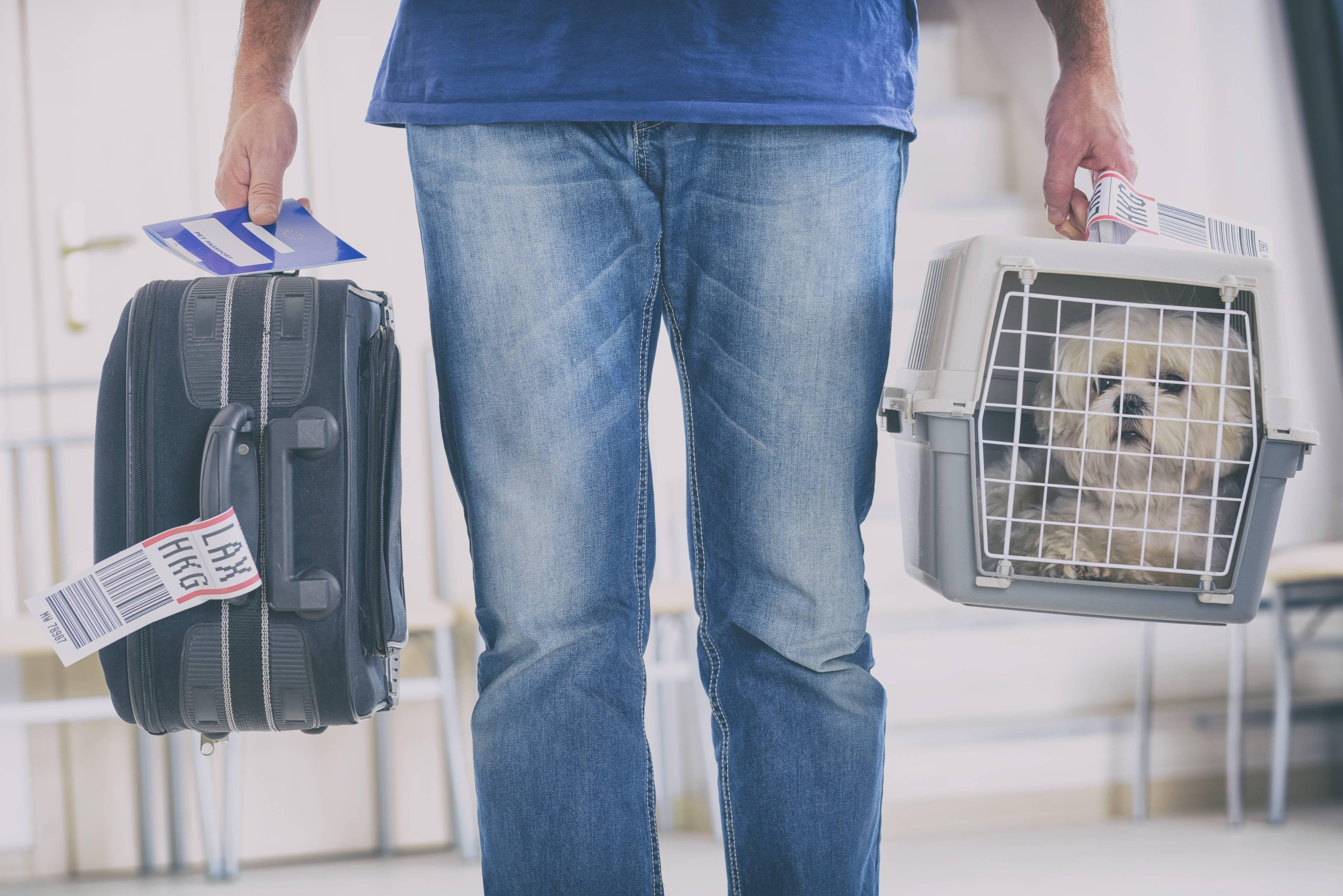 Перевозка кошек в самолете - правила авиакомпаний, выбор переноски, подготовка документов
