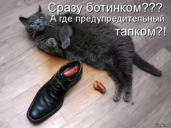 Кот прячется в темные места – 4 основных причины такого поведения