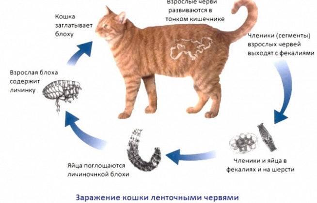 Как узнать когда кошка родит?
