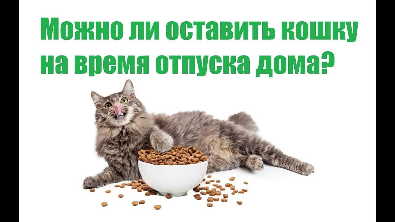 Советы ветеринара: как оставить кошку одну дома на несколько дней без вреда здоровью   животный мир