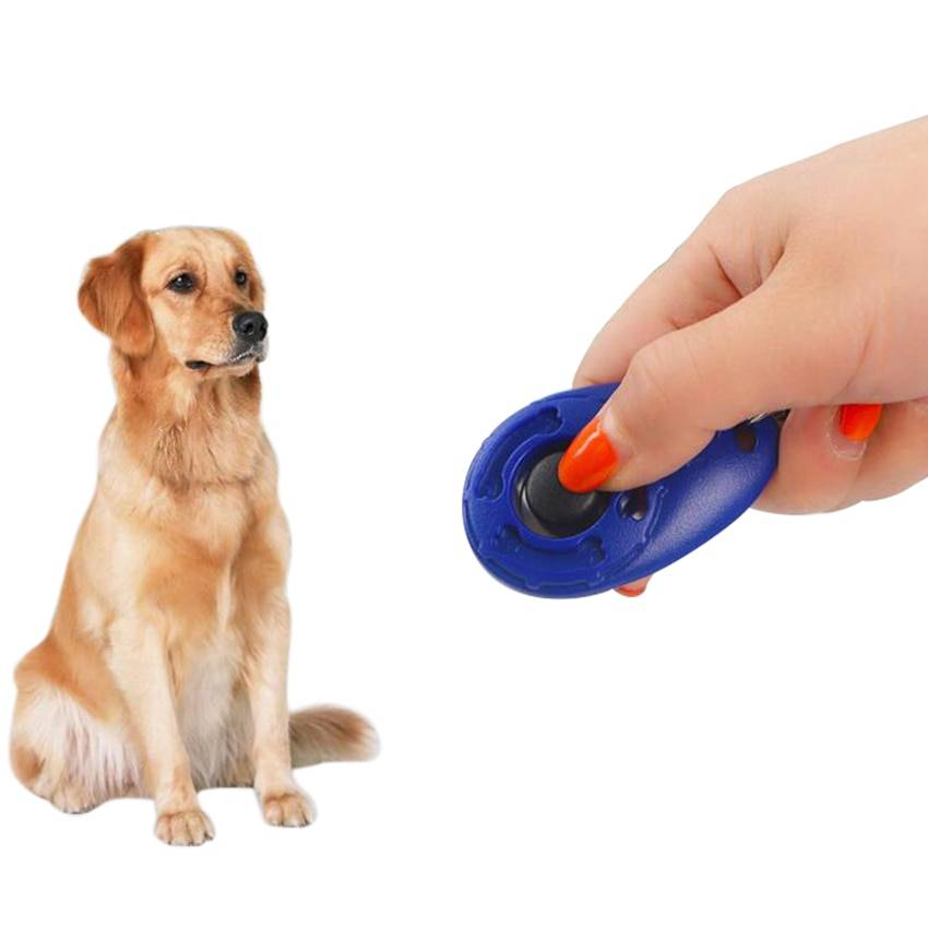 Кликер дрессировка собак: как это работает? wikipet.ru