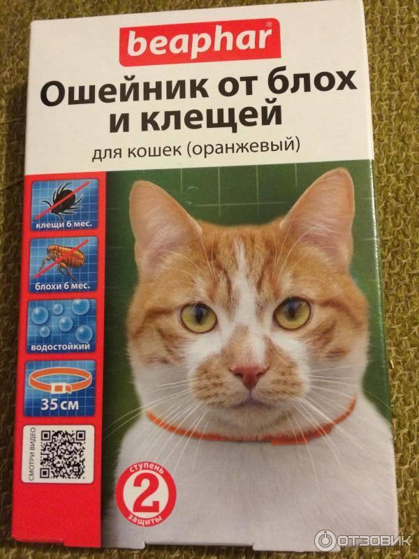 Как вывести блох у кошки - эффективные средства борьбы в домашних условиях с ценами