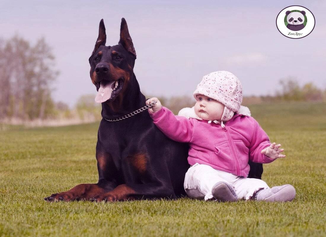 14 лучших пород собак для детей с фото и описанием
