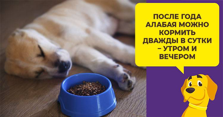 Сколько еды в день нужно давать собаке: как рассчитать норму кормления собаки и щенка натуральным кормом, таблица кормления по граммам