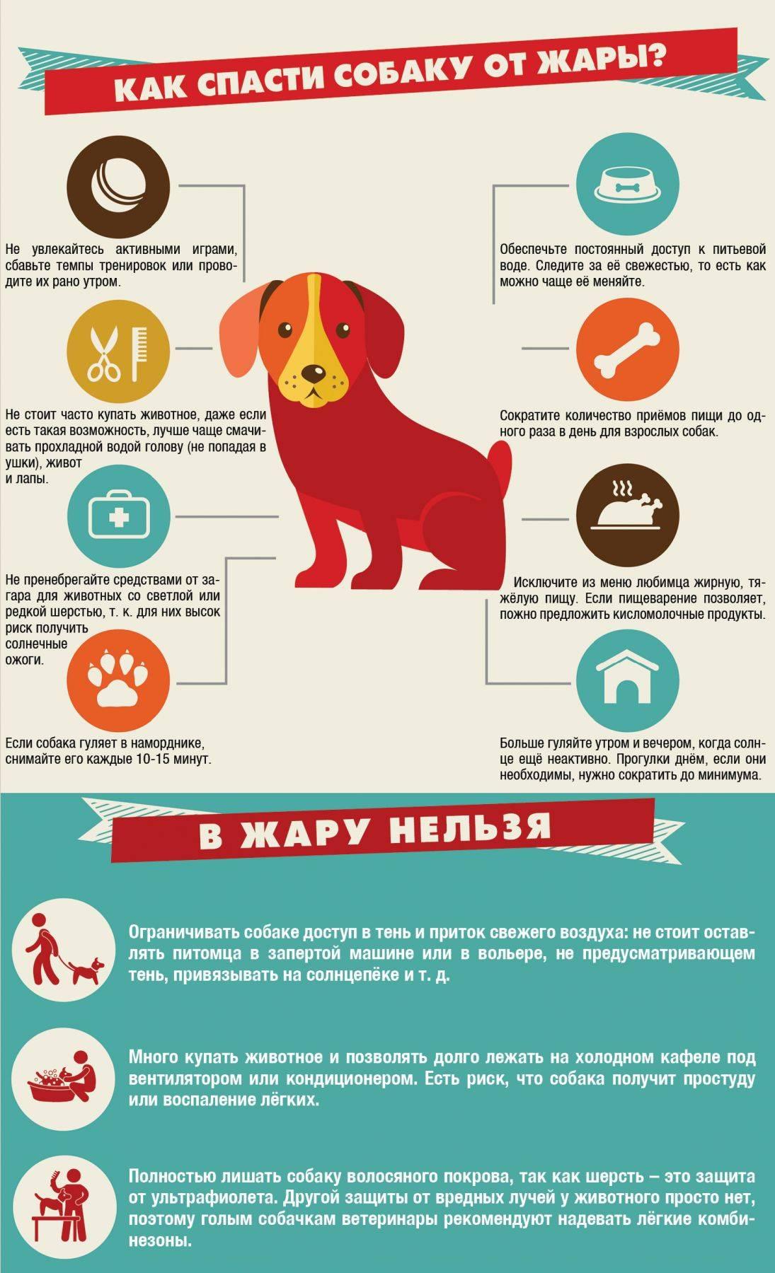 Как приручить собаку
