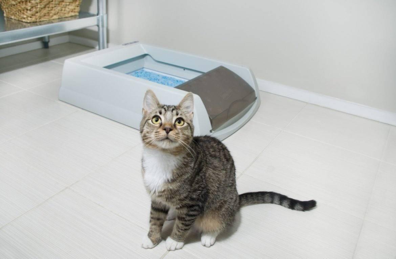 Почему появляется неприятный запах от кошки и о чем говорит?