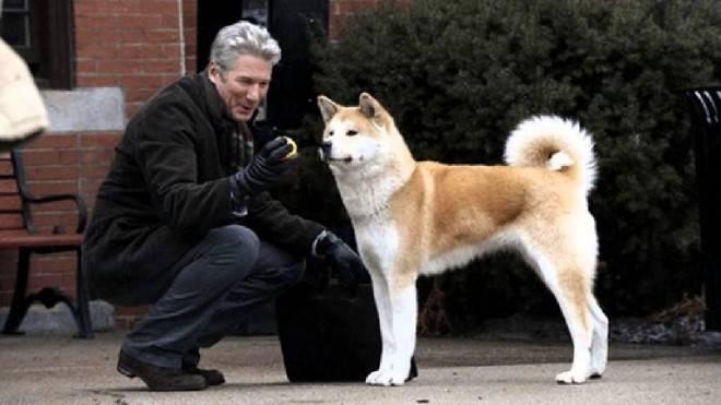 Порода собаки из фильма хатико