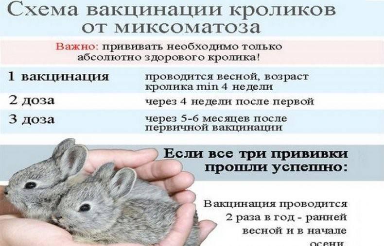 Ассоциированная вакцина для кроликов против миксоматоза и вгбк