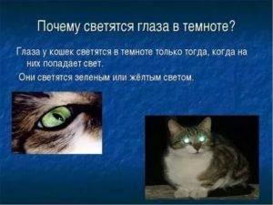 Почему у кошек светятся глаза в темноте: основные причины