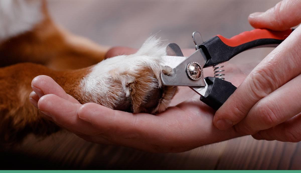 Как подстричь длинные когти собаке