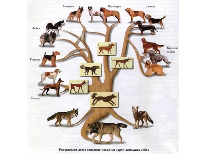 Интеллект пород собак. умники и умницы собачьего мира