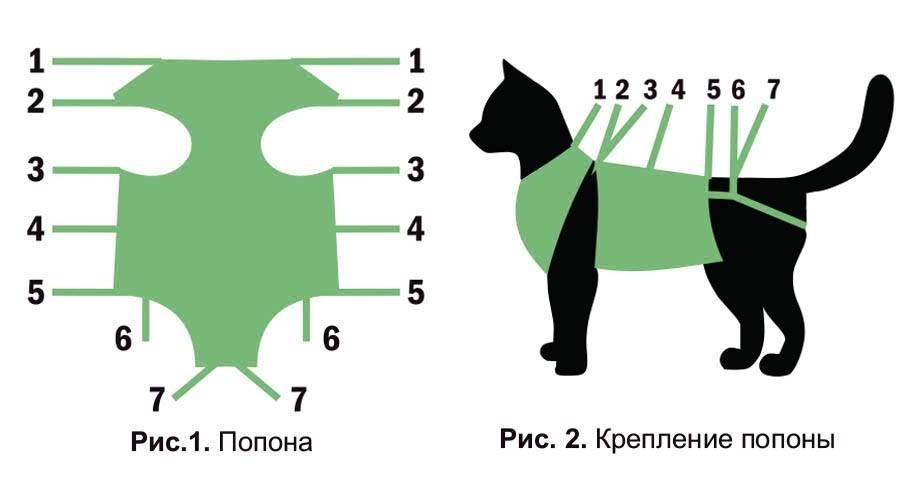 Когда можно снимать с кошки попону после стерилизации: послеоперационный уход, ношение и отказ от бандажа