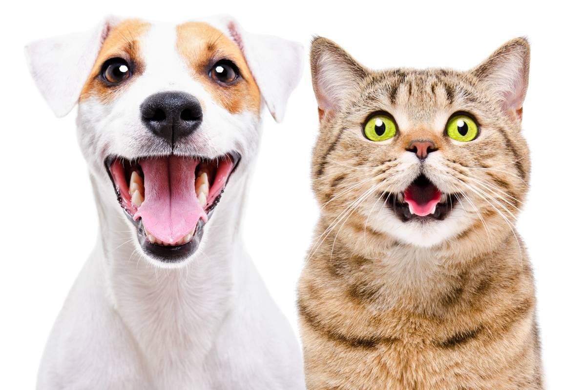 Смех с мехом: какие животные умеют смеяться и улыбаться