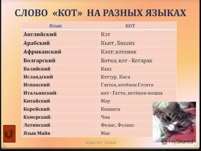 Английские имена для котов: примеры американских кличек