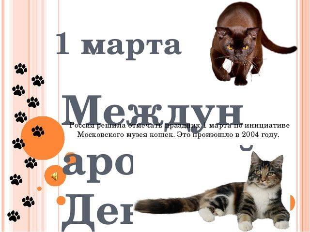 Когда отмечают всемирный день кошек в россии и по всему миру