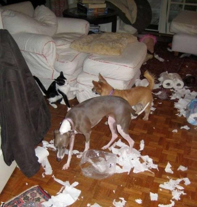 Как отучить собаку грызть все подряд в отсутствие хозяина