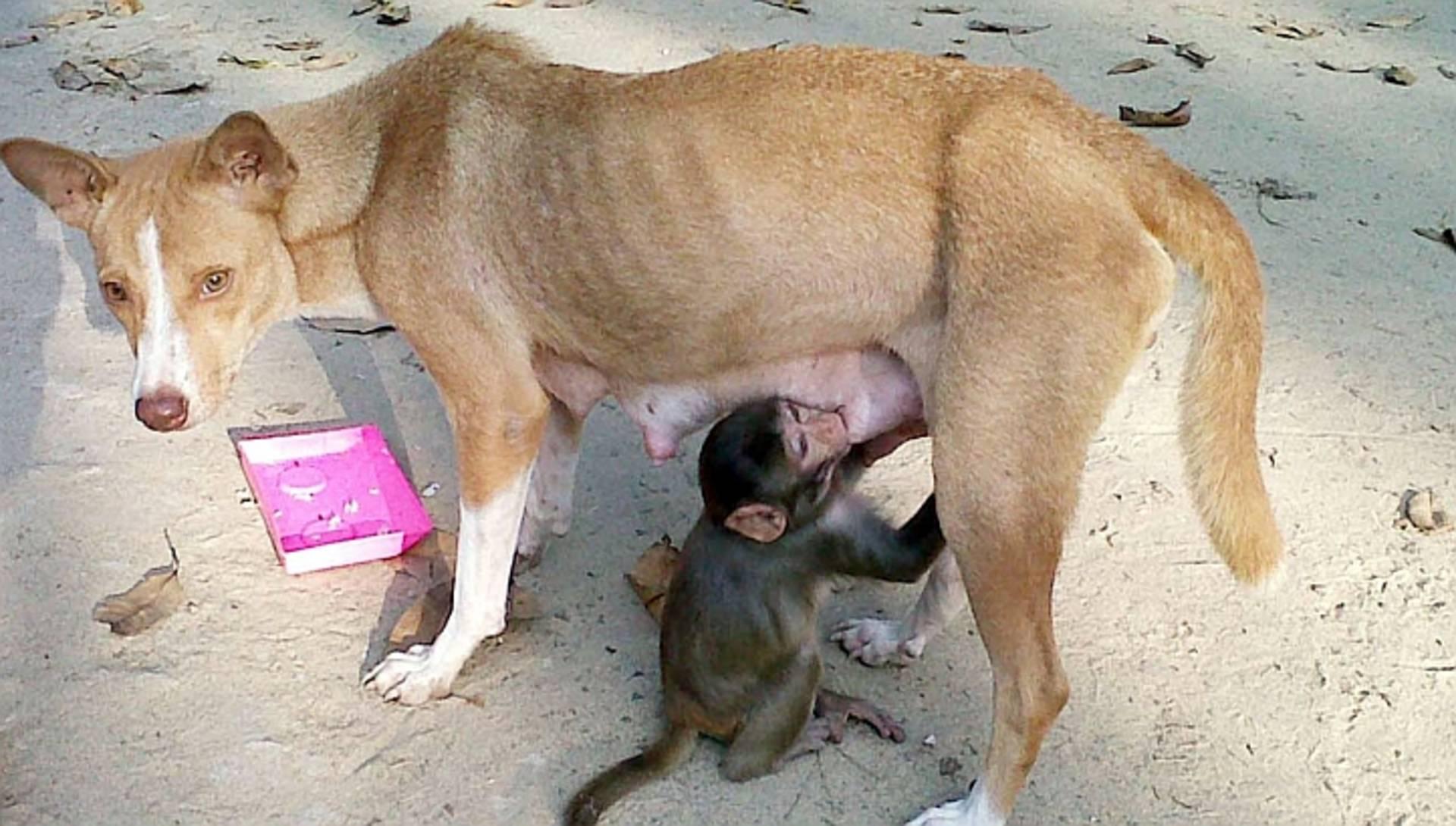 Почему женщины спариваются с собаками. собаки слипаются при спаривании, что делать во время склещивания