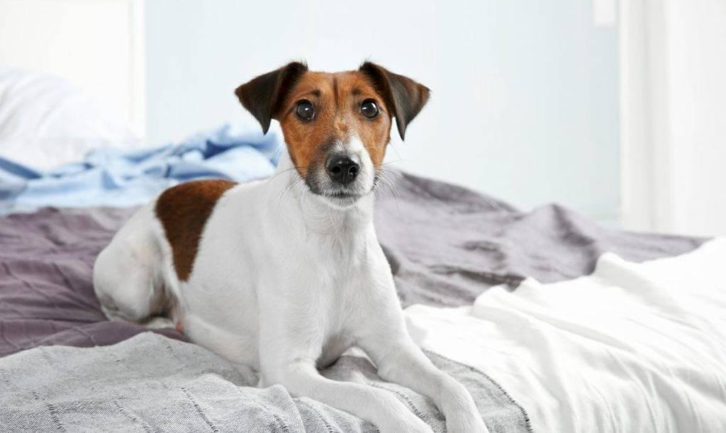 Почему собака часто мочится, почему собака часто писается? цистит у собак