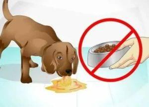 У собаки пропал аппетит: как установить причину и помочь домашнему любимцу