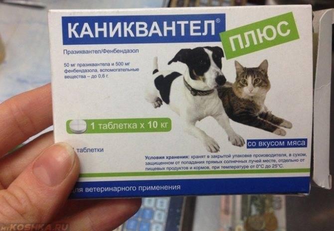 Подготовка кошки к вакцинации, дегельминтизация кошек, за сколько дней глистогонить кошку, пребиотический напиток viyo