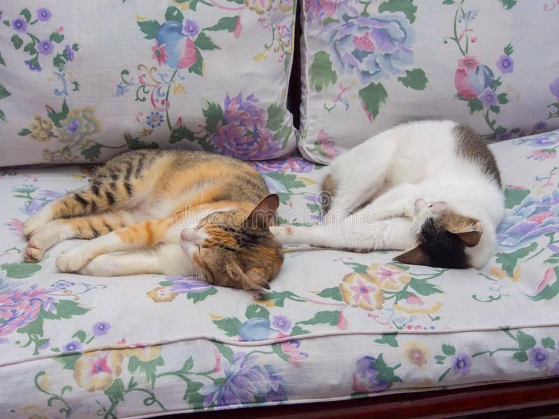 Кот спит на голове хозяина