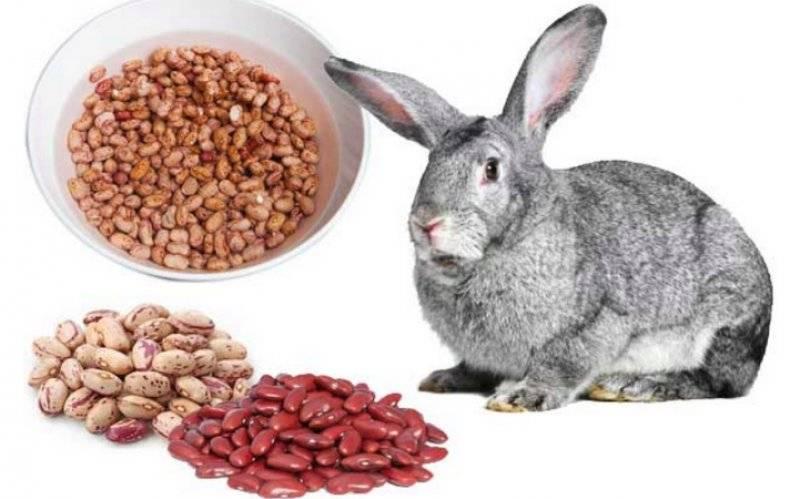 Можно ли давать кроликам сухари