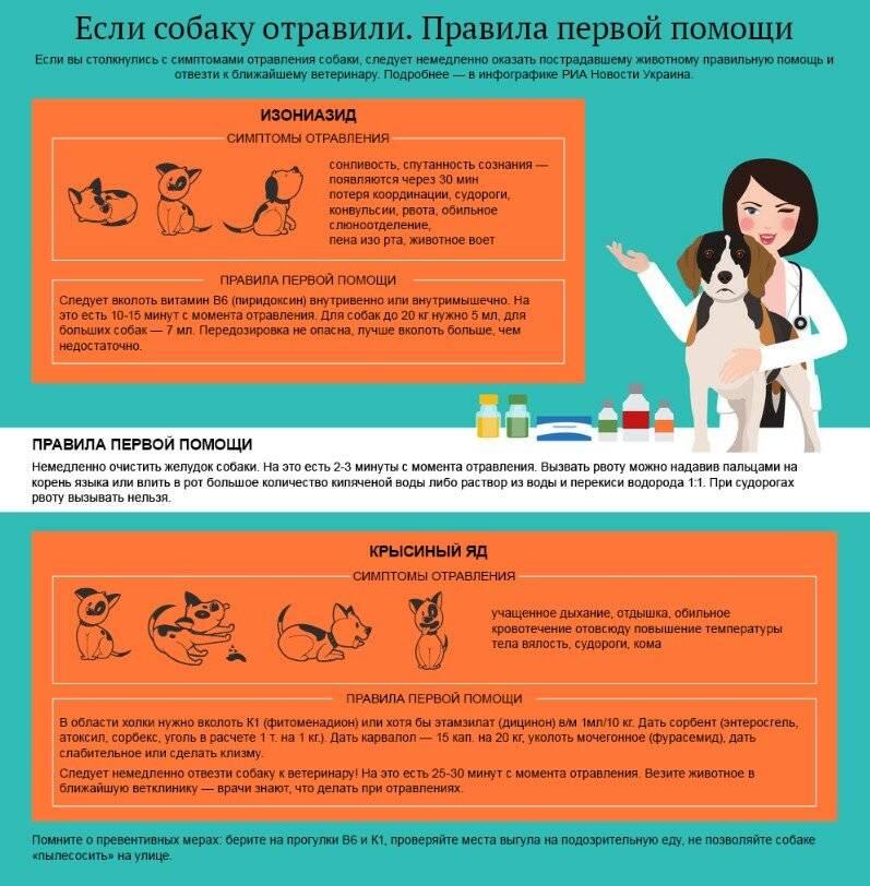 Отравление у собак – симптомы и лечение
