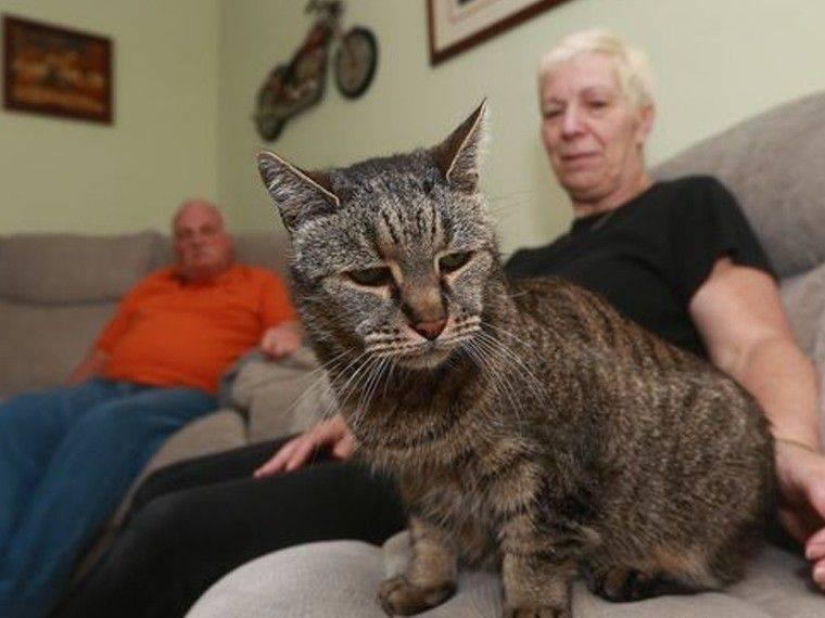 Самые старые кошки в мире