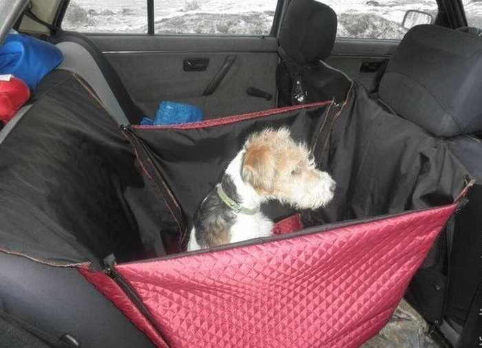 Как перевозить собаку в машине на дальние расстояния без стресса?